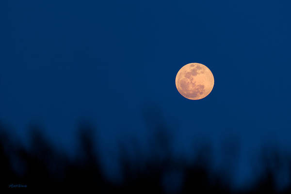 Photograph - May 5 2012 Super Moon In South Florida by Michelle Constantine