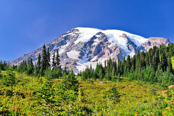 Photograph - Meadows Meet Glaciers by Greg Norrell
