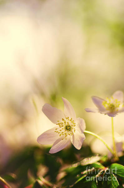 Umwelt Photograph - Melody Of Spring by Tanja Riedel