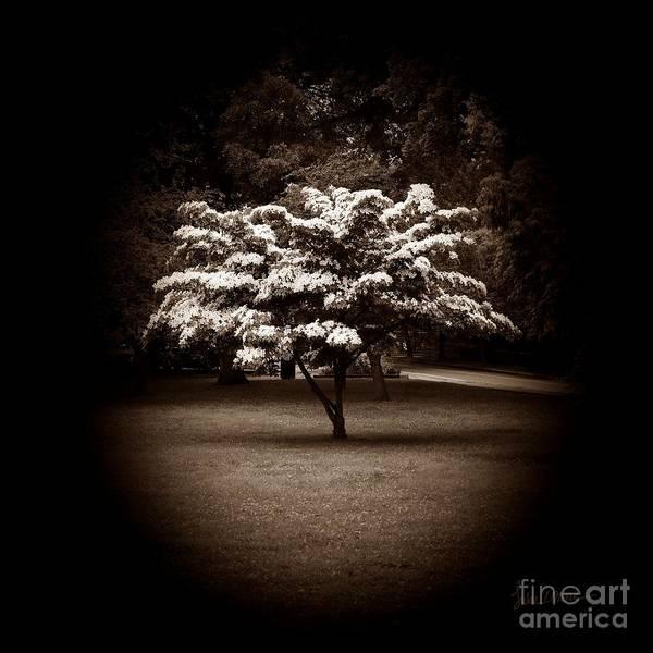 Wall Art - Photograph - Memoir 1 by Luke Moore