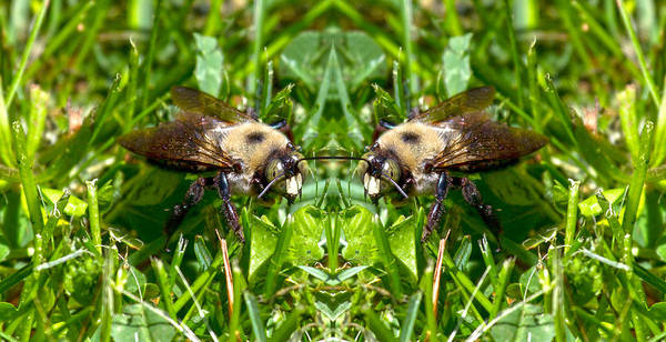 Bumble Bee Wall Art - Photograph - Merlin by Betsy Knapp