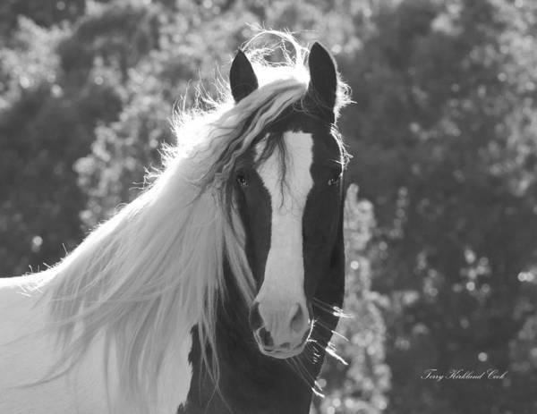 Photograph - Mesmerizing Eyes by Terry Kirkland Cook