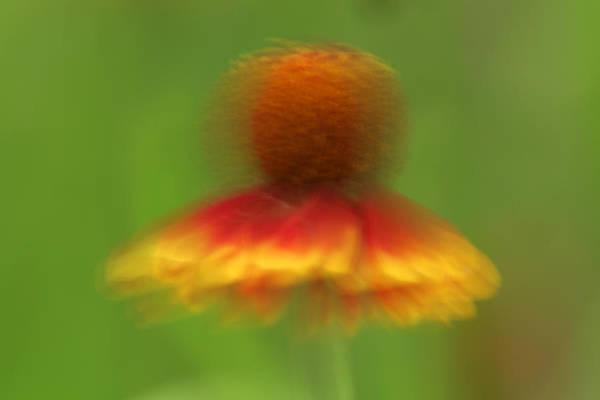 Photograph - Mexican Hat Dance by D Robert Franz