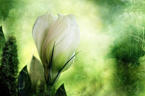 Wall Art - Digital Art - Midnight In The Garden by Margaret Hormann Bfa