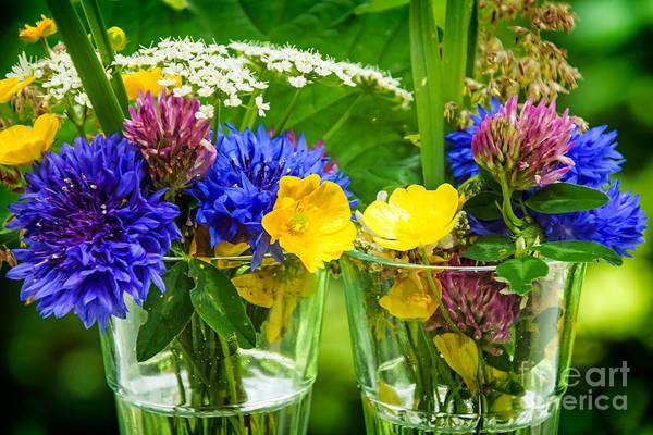 Photograph - Midsummer Flowers by Lutz Baar