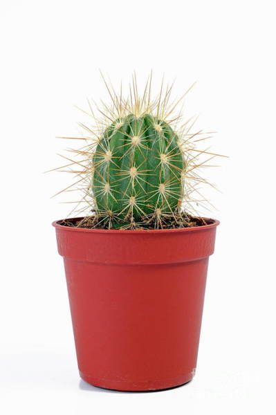 Wall Art - Photograph - Mini Cactus In Pots by Sami Sarkis