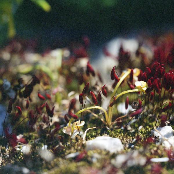 Photograph - Miniature World by Paul Cowan
