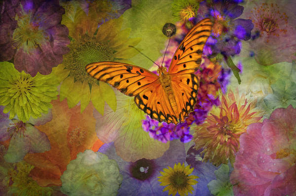 Gulf Fritillary Wall Art - Photograph - Miracles Abound by Bonnie Barry