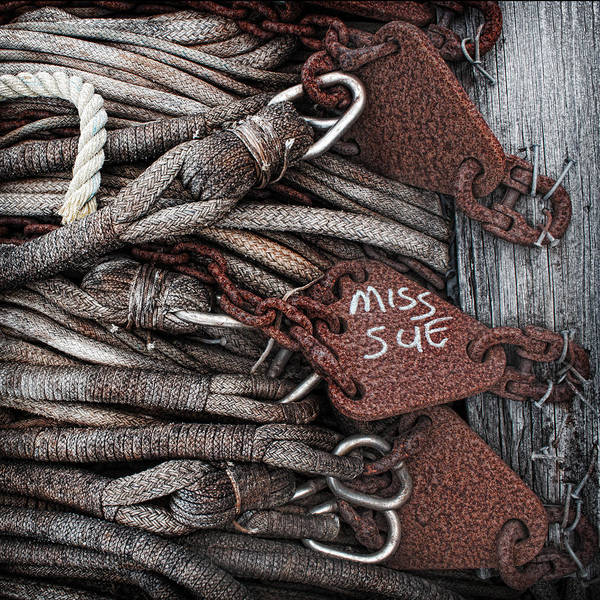 Knot Wall Art - Photograph - Miss Sue by Elena Nosyreva