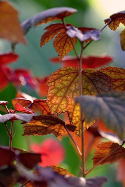 Photograph - Missing Autumn by Melanie Moraga