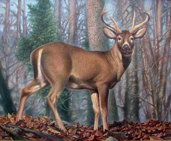 Painting - Missouri Whitetail Deer by Hans Droog