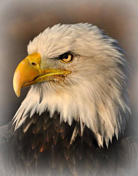 Photograph - Misty Eagle by Marty Koch