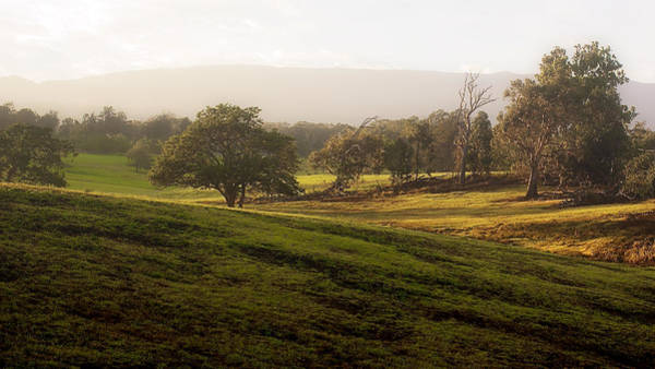 Photograph - Misty Maui Morning by Trever Miller