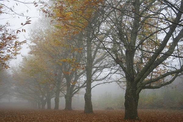 Photograph - Misty November by Georgia Fowler