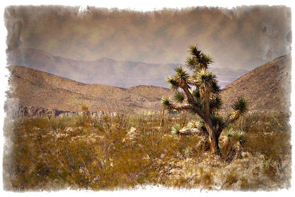 Painted Desert Photograph - Mojave - Impressions by Ricky Barnard