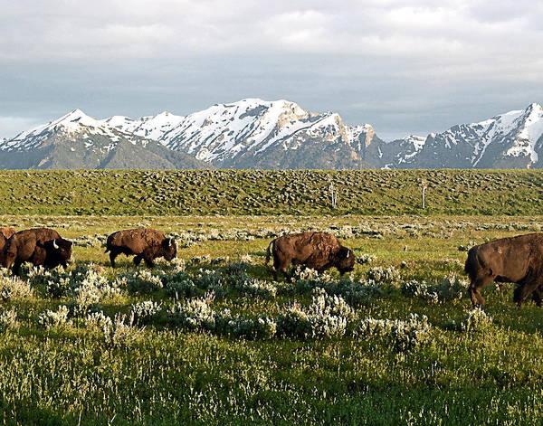 Teton National Park Digital Art - Monarch Of The Plain by Don Saxon