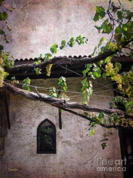 Photograph - Monastery Garden by Eena Bo