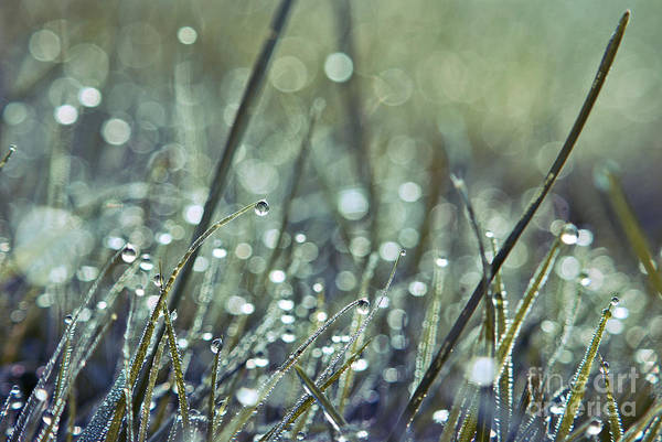 Raindrops Photograph - Mondo 02 - S02c by Variance Collections