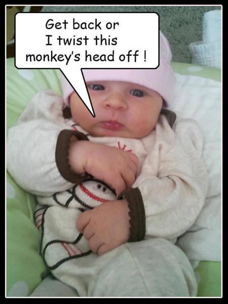 Photograph - Monkey In Jeopardy by Steve Sperry