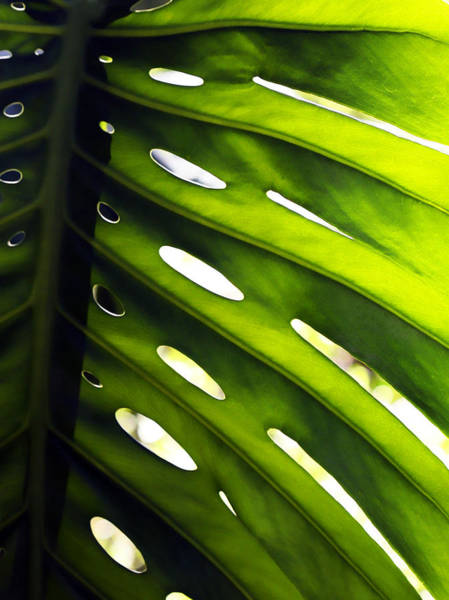 Photograph - Monstera by Marilyn Hunt