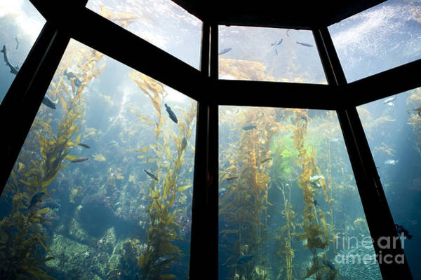 Monterey Bay Aquarium Photograph - Monterey Bay Aquarium, Monterey, California, Ca by Paul Edmondson