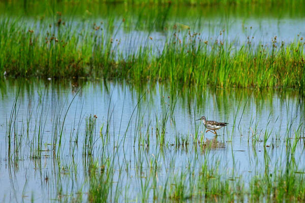 Wall Art - Photograph - Montezuma National Wildlife Refuge by Paul Ge