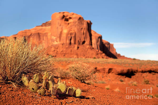 Navajo Indian Reservation Photograph - Monument Valley Cactus by Jane Rix