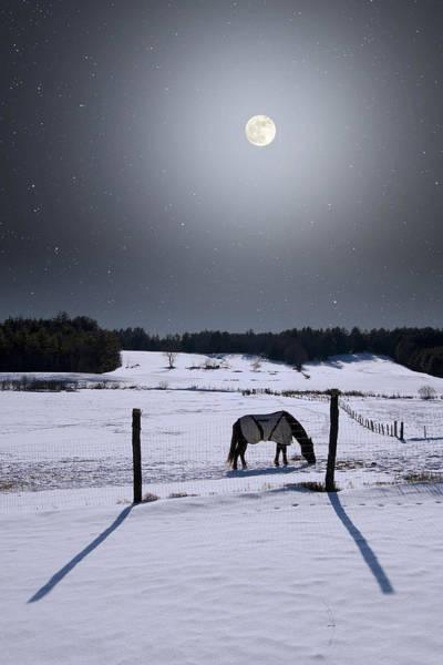 Photograph - Moonlit Horse by Larry Landolfi