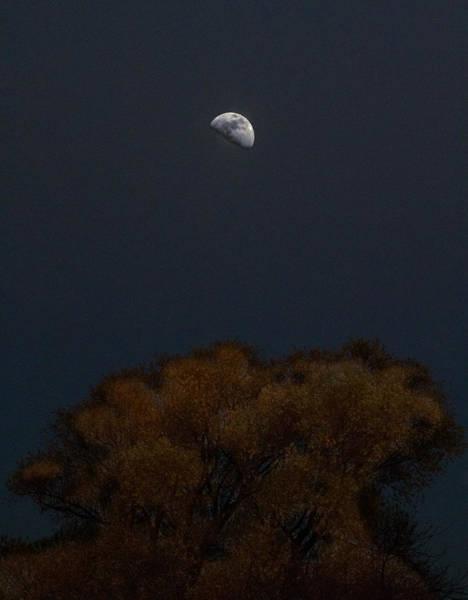 Photograph - Moonlite  by Dragan Kudjerski