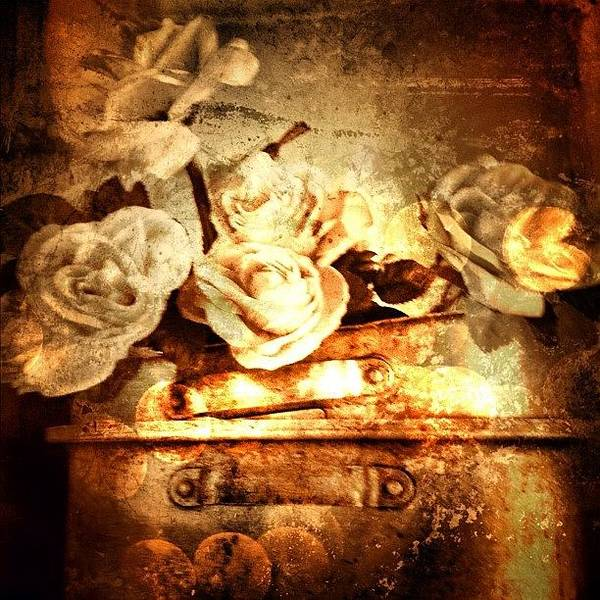 Iphone Wall Art - Photograph - Mor Flowas. #iphone #photooftheday by Johnathan Dahl