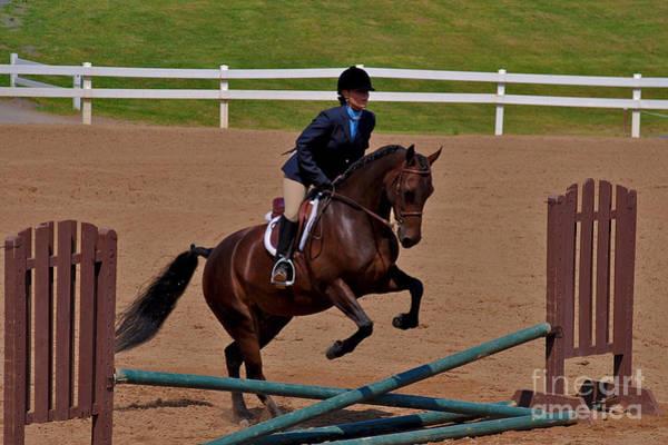 Photograph - Morgan Jumping 2 by Mark Dodd
