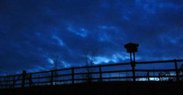 Photograph - Morning Blues by Deb Martin-Webster
