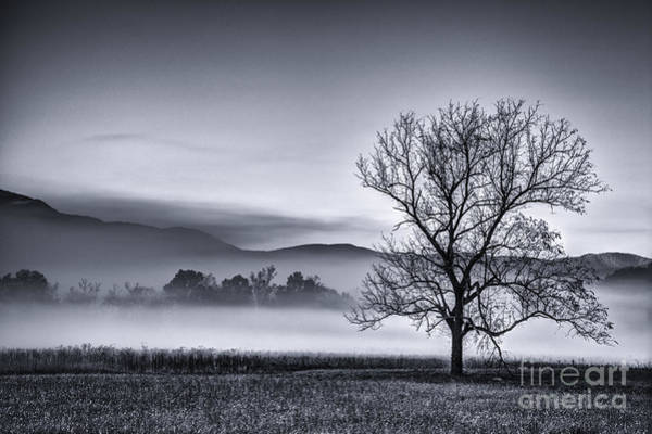 Photograph - Morning Fog by David Waldrop