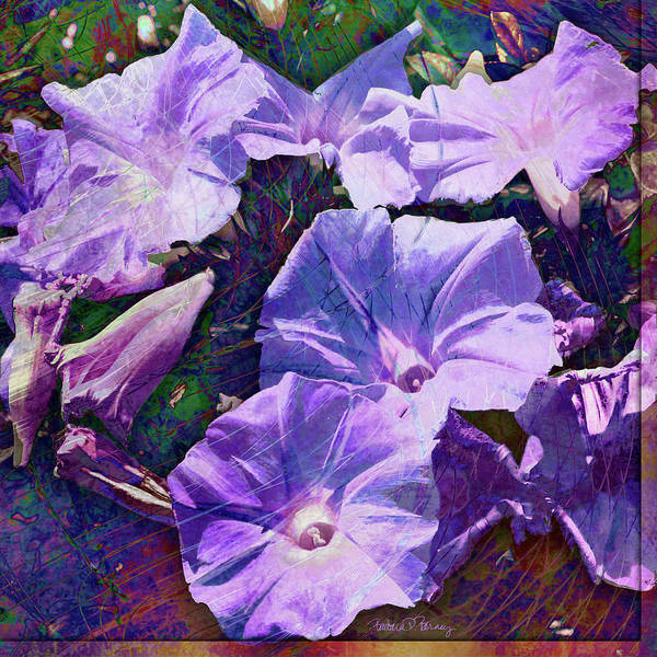 Digital Art - Morning Glory by Barbara Berney