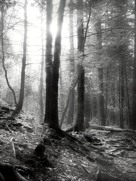 Photograph - Morning Sun by Mary Almond
