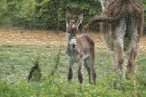 Photograph - Mosaic - Donkey by Ericamaxine Price