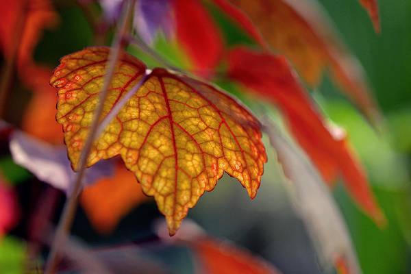 Photograph - Mosaic Autumn by Melanie Moraga