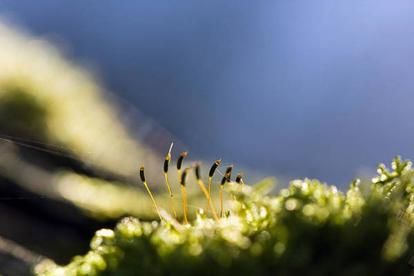 Photograph - Moss by Odon Czintos