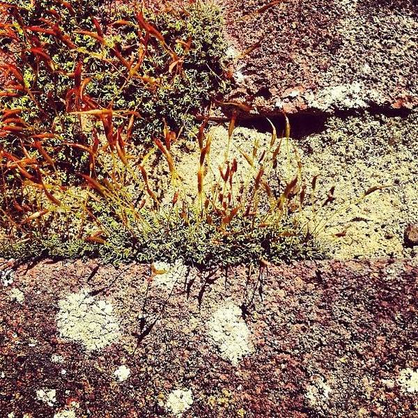 Pattern Wall Art - Photograph - Moss Wall Abstract by Nic Squirrell