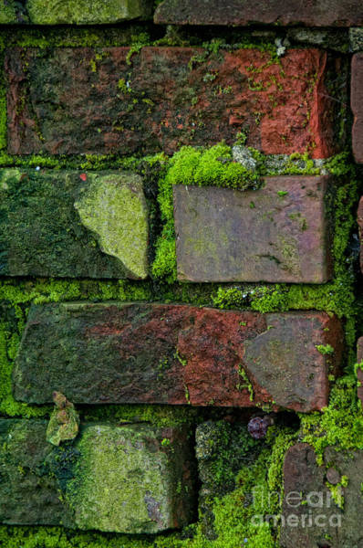 Wall Art - Digital Art - Mossy Brick Wall by Carol Ailles