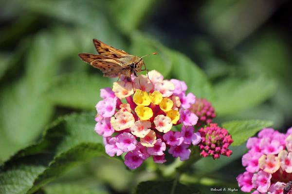 Photograph - Moth by Deborah Hughes
