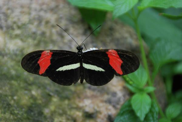 Photograph - Moth IIi  2397 by Guy Whiteley