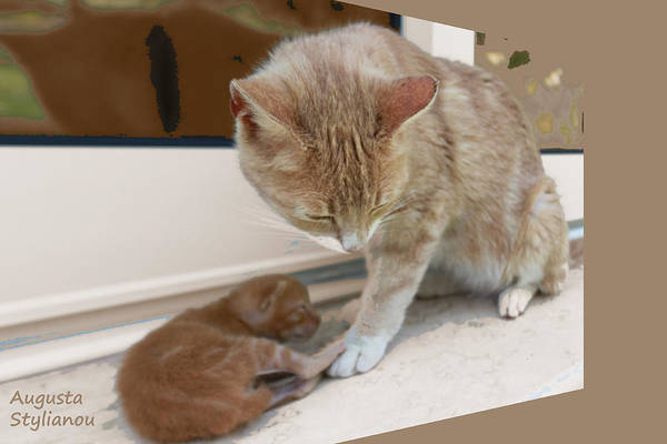 Photograph - Mother And Kitten by Augusta Stylianou