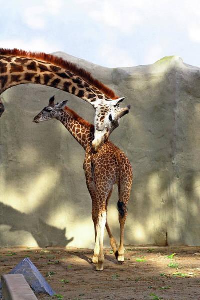 Photograph - Mother Child Giraffe by Lorraine Devon Wilke