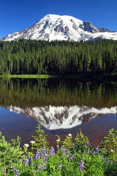 Photograph - Mount Rainier Reflection Lake Wildflowers by Pierre Leclerc Photography