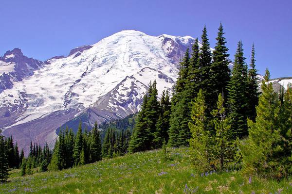 Photograph - Mount Rainier X by David Patterson
