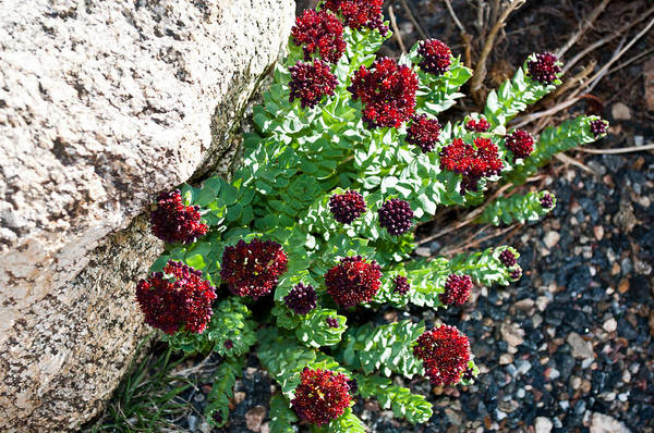 Photograph - Mountain Blooms by Colleen Coccia