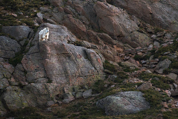 Photograph - Mountain Climber by Ryan Heffron