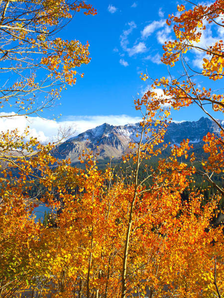 Photograph - Mountain Colors by Rick Wicker