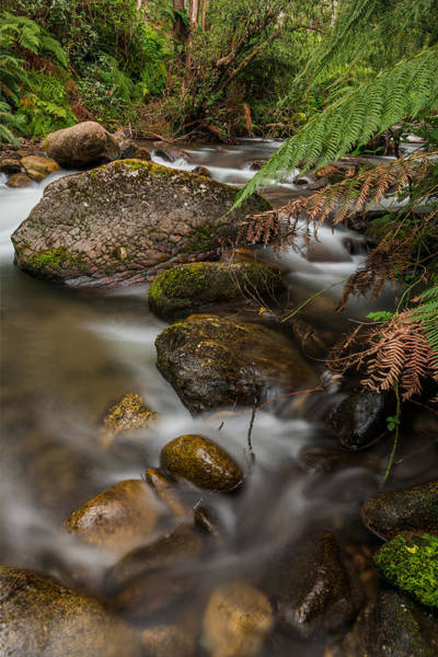 Gully Photograph - Mountain Creek  by Mark Lucey